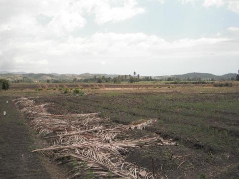 A Farm Created by Soul of Haiti
