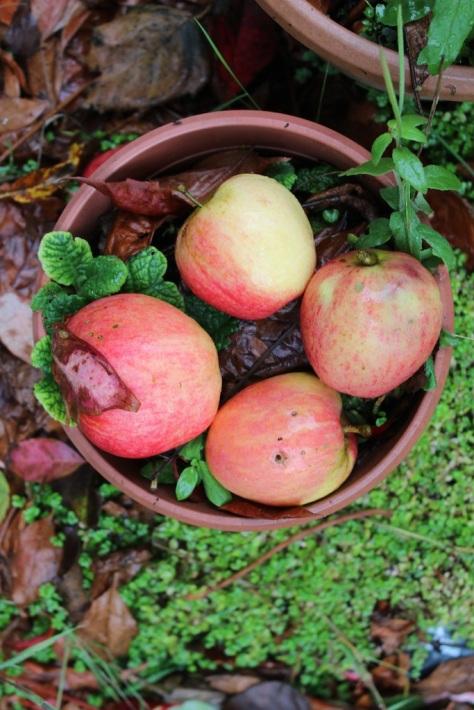 Autumn's Apples